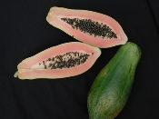 Tainung #1 Papaya - 100 Seeds